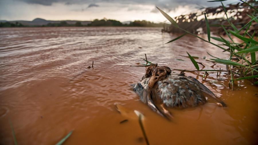 26.nov.2015 - O fotógrafo Leonardo Merçon presenciou o desastre de Mariana e registrou os danos ambientais e à população - Instituto Últimos Refúgios