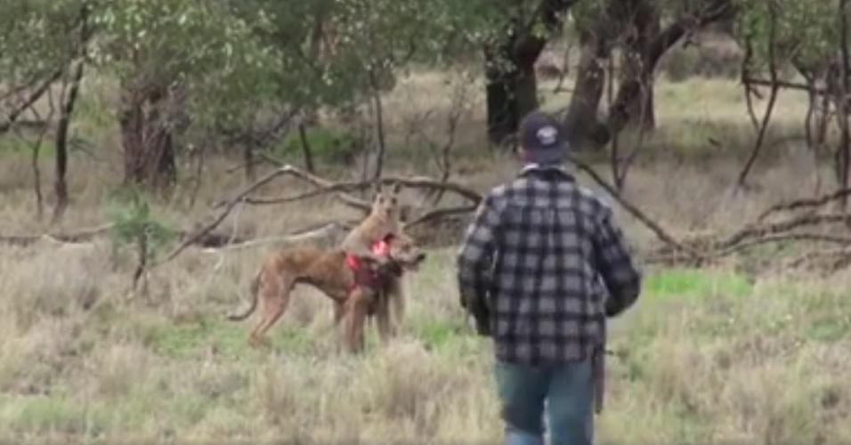 6.nov.2016 - O vídeo de um homem tentando defender o seu cachorro de um canguru, na Austrália, viralizou nas redes sociais. Segundo o site local The Independent, o homem estava com outras pessoas e seus cães em uma região de mata, durante uma caça a um javali