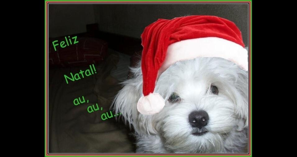 Tina Fusco enviou foto do seu Lindo Theodoro prontinho para o Natal
