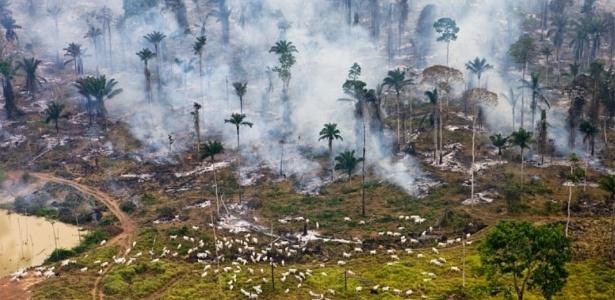 Desmatamento e incêndios criminosos na Amazônia - Reprodução/El Confidencial
