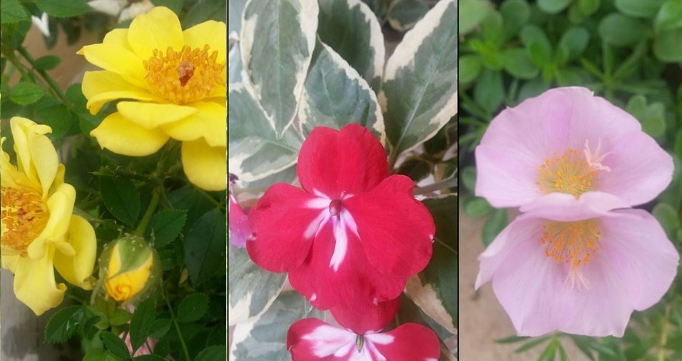 """Elisete Deam, de Marília (SP) - """"Todas plantas que envio são cultivadas por mim"""""""