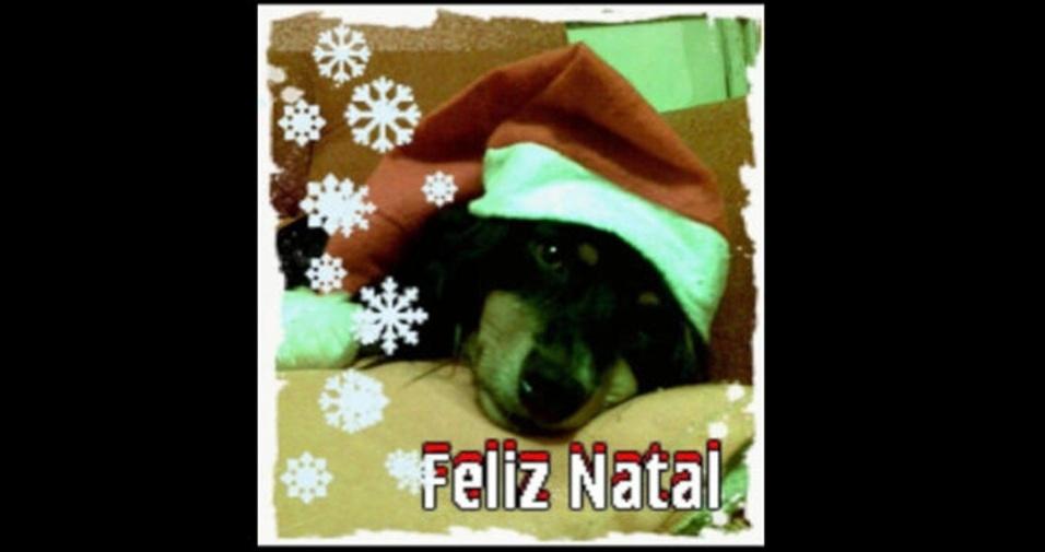 """""""Essa é minha cachorrinha Vavau esperando um Natal cheio de petiscos"""", conta  Cléo Hatje, de Panambi (RS)"""