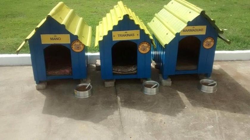 27.mar.2017 - Cachorros viviam no ginásio de esportes em frente ao posto, mas viviam no estabelecimento. Após o posto ser vendido, a nova proprietária trouxe as casinhas dos bichos para o local, além disso, as casas foram pintadas seguindo as cores da empresa
