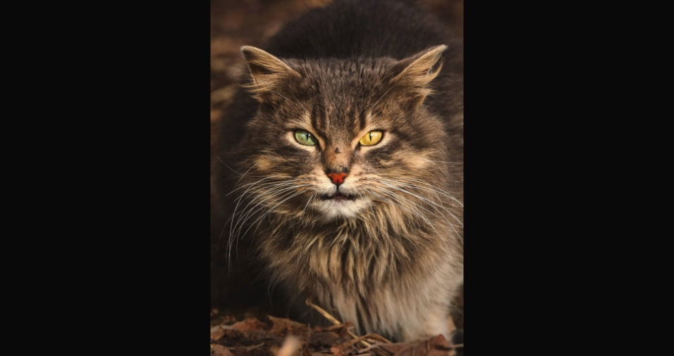 """17.jul.2017 - """"Claramente, cada gato de rua tem sua própria história de vida, e está visivelmente refletida em sua aparência e comportamento. Todos eles têm esse olhar quase sábio, como se tivessem visto a vida inteira"""", explica o fotógrafo em sua página do Facebook"""