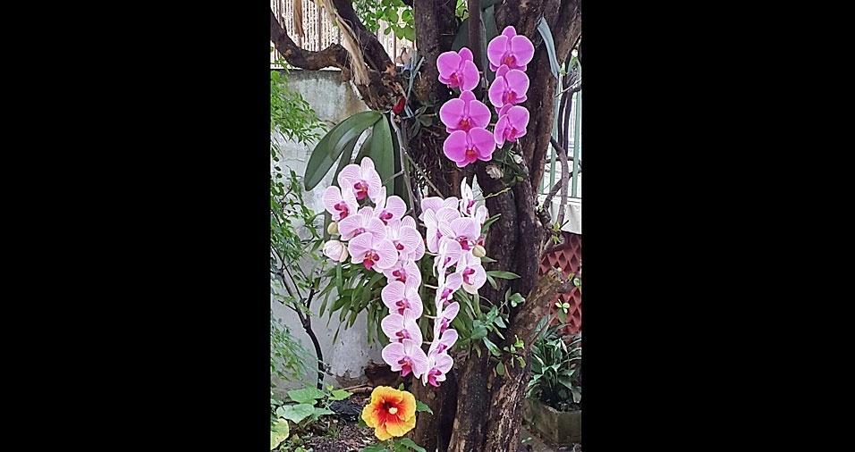 Cristina Rigoni, do Rio de Janeiro (RJ), mostra suas orquídeas