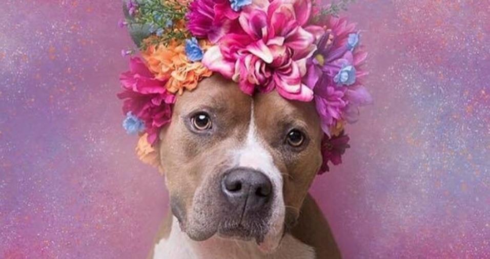 2. De acordo com o site oficial da fotógrafa Sophie Gamand, mais de um milhão de pit bulls são sacrificados anualmente. Associados com violência, eles acabam sendo descartados em abrigos ou abandonados. No entanto, Sophie destaca que eles são como qualquer outro cão, só precisam de muito amor. Na foto Alize