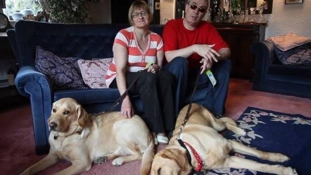"""6.ago.2013 - O amor entre os cães-guia, Veneza e Rodd, uniu seus donos, Claire Johnson, de 50 anos, e Marcos Gaffey, de 52 anos. O casal de cegos britânicos entrou em um curso para treinar seus cachorros para acompanhar deficientes visuais. O amor entre os bichinhos foi imediata. """"Durante o treinamento os nossos dois cães pareciam saber algo que nós não sabíamos. Os treinadores disseram que nossos cães estavam apaixonados e isso nos aproximou. Eles são um casal tanto quanto nós"""", revelou Marcos. A relação entre os cães rapidamente uniu os donos, que, onze meses após o primeiro encontro, decidiram se casar. Como Veneza e Rod foram responsáveis por manter os donos juntos, o casal decidiu que os bichinhos serão padrinhos e levarão as alianças até o altar, no fim do ano, durante a cerimônia"""
