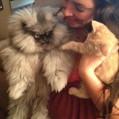 """1.set.2013 - """"O primeiro de meus súditos"""", 'diz' o gato Colonel Meow em seu perfil da internet. Os donos Anne Marie Avey e Eric Rosario criaram uma personalidade extravagante para representar o bichano"""