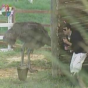 """09.out.2010 - Sérgio Mallandro se esconde de avestruz enquanto faz sua tarefa diária. No reality, Mallandro não abandonou seu bone """"pirocóptero"""" e as camisetas pretas com suas frases"""