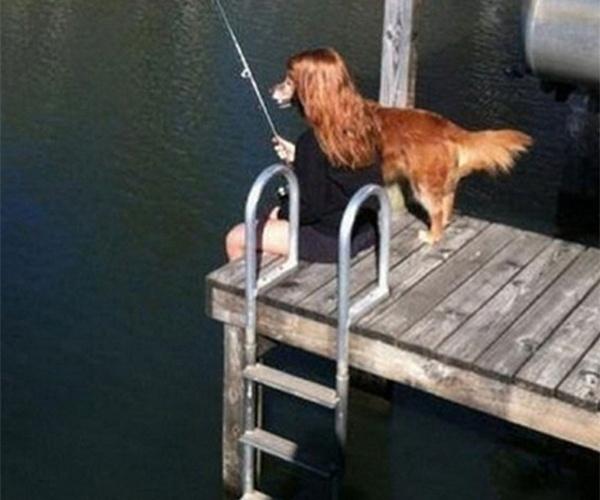 Pescaria animal