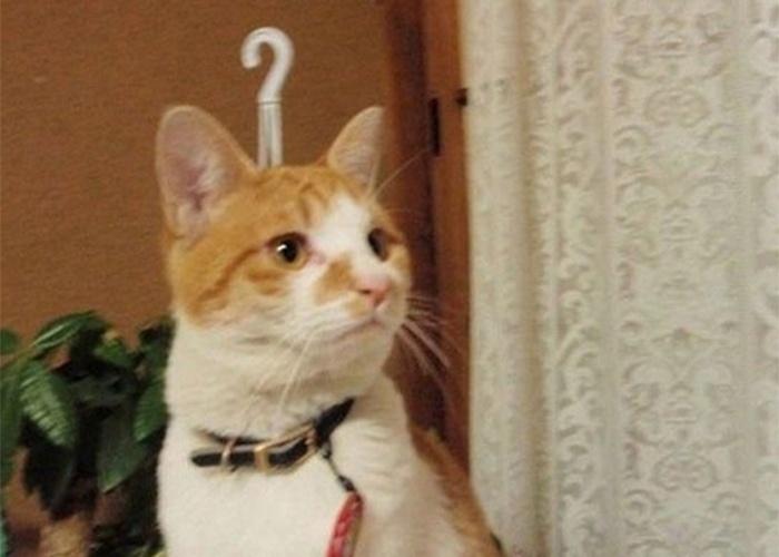 Um gatinho com dúvida ou uma peça muito fofa de decoração para pendurar: você escolhe!