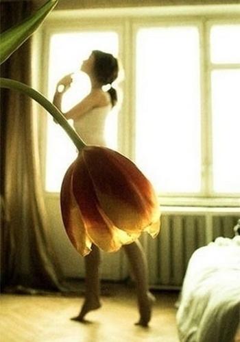 Uma flor ou uma saia?