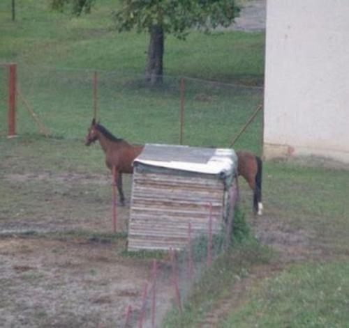 Não é possível! Um cavalo alongado como este não existe, é só o começo do corpo de um com o final do corpo de outro equino que dá a impressão de ser um animalzão