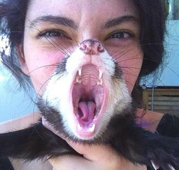 Que sono animal! Guaxinim abre o bocão até dar a impressão de que a garota com focinho alongado está morrendo de preguiça