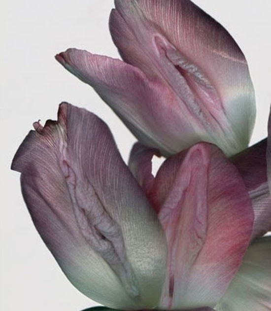 Mais flores que remetem à intimidade feminina