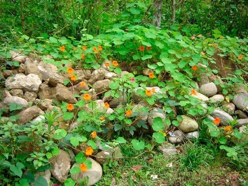 10.jun.2014 - Esqueça de procurar o gato entre as pedras e flores. Ele está escondido em um dos cantos desta imagem de natureza