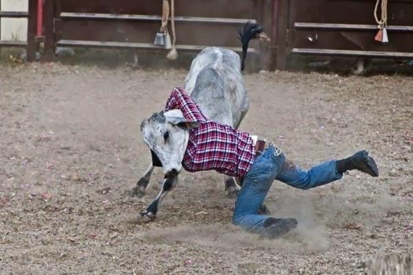 Chegará o dia em que os homens viverão na pele de touros? Olhe duas vezes...