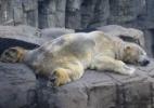 Reprodução/Save Polar Bear Arthur