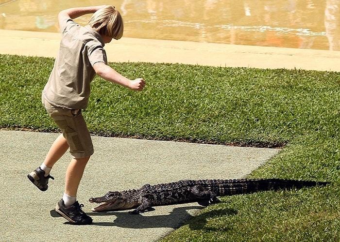 26.set.2014 - Confiante, Robert Irwin arriscou passos de dança com um crocodilo no zoológico da família, na Austrália.