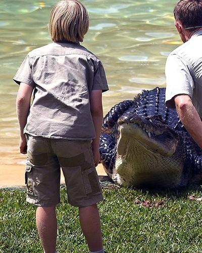 26.set.2014 - Segundo declarou um espectador ao Daily Mail, em determinado momento, Robert Irwin  ficou bem próximo de um bicho, que perdeu a paciência e quase o atacou.