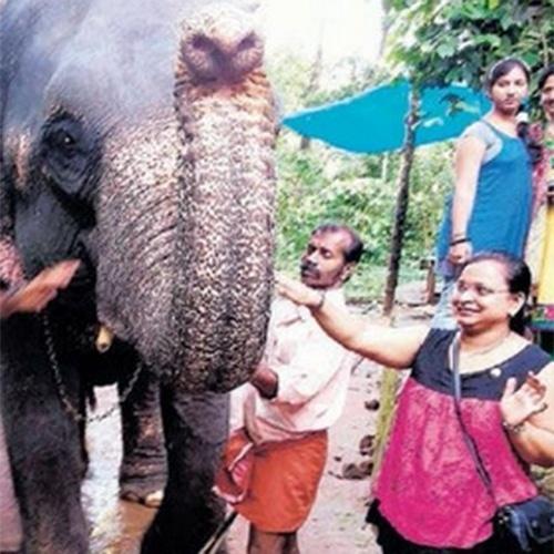 28.out.2014 - Uma turista indiana morreu no sul da Índia depois de ser pisoteada por um elefante quando estava tirando uma selfie com o animal. Dipali (á direita, de rosa), uma professora de 27 anos, estava com a família em uma famosa localidade de Kerala quando aconteceu a tragédia. Segundo a polícia, a turista, que é originária de Gujarat, fez uma pose para tirar uma foto ao lado do elefante, usado para safáris nas florestas de Munnar, mas provavelmente o animal não gostou da sua presença e a derrubou com a tromba, ao cair, ela acabou embaixo das patas do paquiderme. A imagem acima, segundo o site  Manorama Online, foi feita antes da foto que seria fatal.