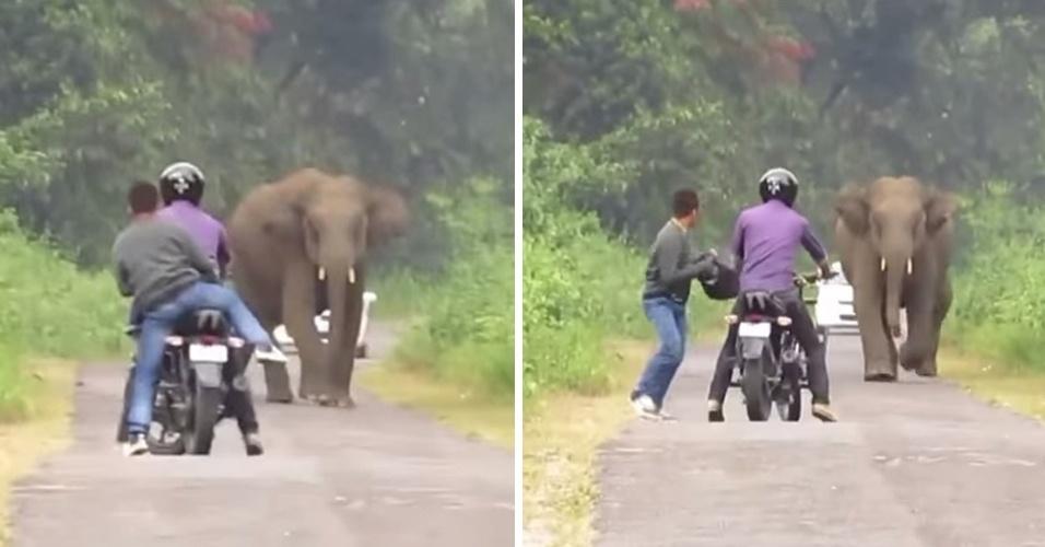 12.nov.2014 - Na Índia, dois homens foram surpreendidos por um elefante furioso e tiveram que fugir deixando a moto em que estava para trás. A aventura foi filmada por um indiano chamado Jasoprakas Debdas. O vídeo foi postado no YouTube e teve mais de de 380 mil visualizações.