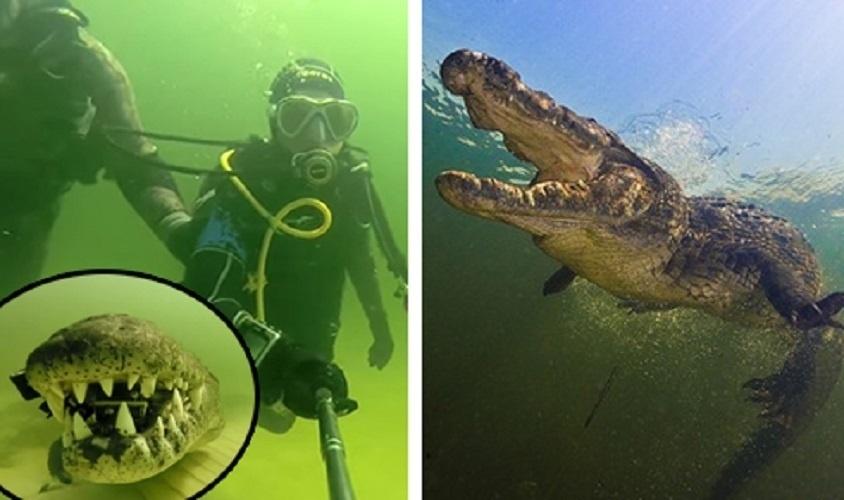 15.nov.2014 - Um mergulhador foi roubado por um crocodilo. Isso mesmo! Enquanto captava imagens no fundo de um rio, Amos Nachoum foi surpreendido com pelo réptil, que cravou os dentes em sua câmera GoPro. A sorte foi que o mergulhador estava acompanhado de um amigo, que estava com outra câmera e conseguir registrar a cena. O flagra foi feito em Okavango Delta (Botsuana), em outubro, mas as imagens só foram divulgadas nesta semana pelo site Barcroft Media. Confira nas imagens a seguir a sequência que levou o mergulhar a perder sua câmera