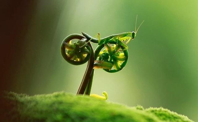 6.jan.2014 - A imagem formada por um gafanhoto e uma planta se assemelha a uma bicicleta. O flagra do fotógrafo Tuscel Ico integra uma seleção das melhores 30 imagens de animais em movimento que está circulando na web