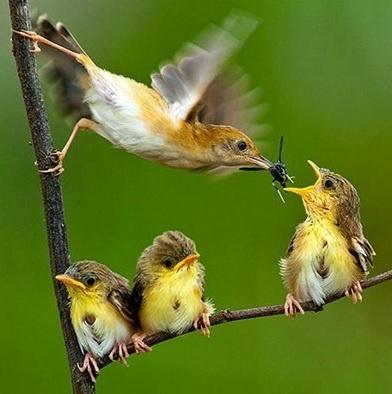 6.jan.2014 - A mãe alimenta um de seus filhotes. O flagra do fotógrafo Cherly integra uma seleção das melhores 30 imagens de animais em movimento que está circulando na web