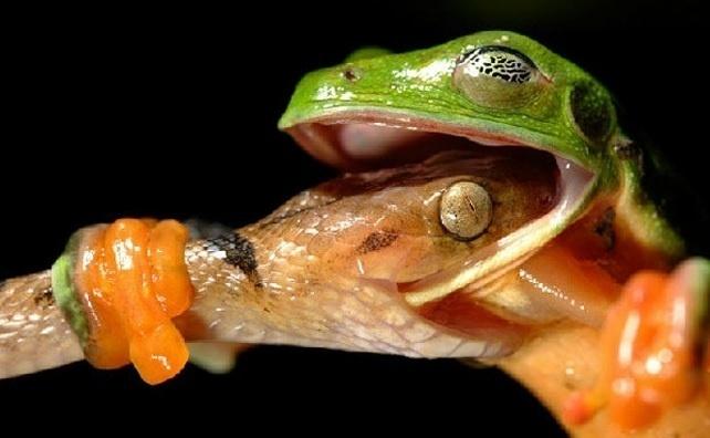 6.jan.2014 - É impossível saber se essa cobra e esse lagarto estavam brigando ou brincando. O que será que aconteceu? O flagra do fotógrafo David Maitland integra uma seleção das melhores 30 imagens de animais em movimento que está circulando na web
