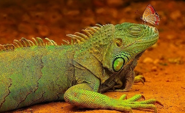6.jan.2014 - Encontro de um lagarto com uma borboleta. O flagra do fotógrafo Hakan Pekbelgin integra uma seleção das melhores 30 imagens de animais em movimento que está circulando na web