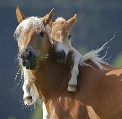 6.jan.2014 - Égua ganha um abraço de seu filhote. O flagra do fotógrafo K. Buchmann integra uma seleção das melhores 30 imagens de animais em movimento que está circulando na web