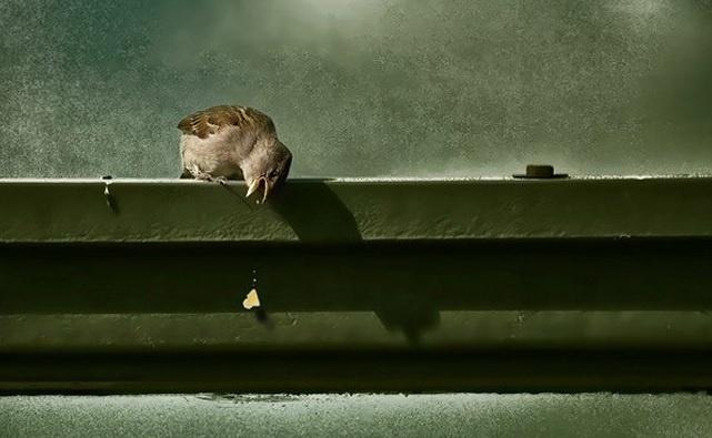 6.jan.2014 - O passarinho deixa sua comida cair. Coitado! O flagra do fotógrafo Harry Roekens integra uma seleção das melhores 30 imagens de animais em movimento que está circulando na web