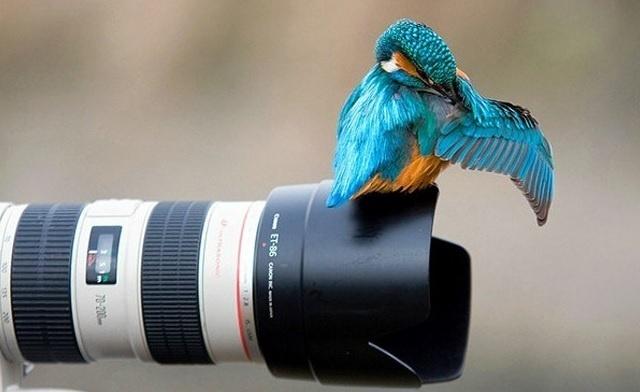 6.jan.2014 - Passarinho é clicado em cima de uma câmera. O flagra do fotógrafo Zoltan Gyori integra uma seleção das melhores 30 imagens de animais em movimento que está circulando na web