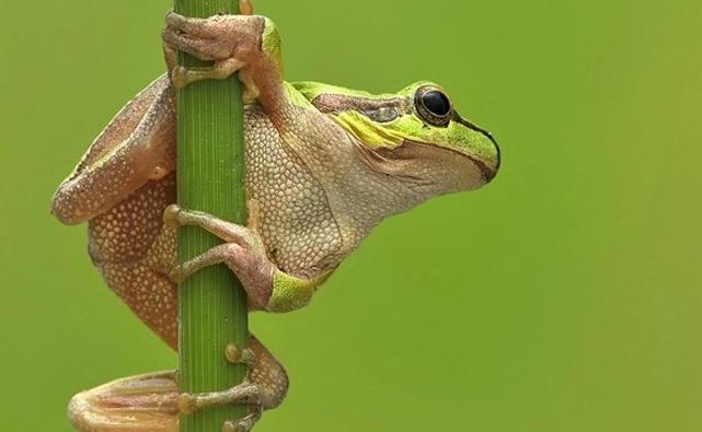 6.jan.2014 - O sapo parece fazer uma espécie de pole dance sobre o objeto em que está apoiado. O flagra do fotógrafo Urs Schmidli integra uma seleção das melhores 30 imagens de animais em movimento que está circulando na web