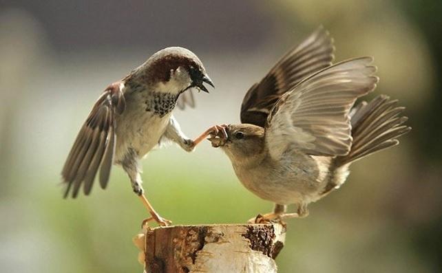 6.jan.2014 - Parece que o passarinho da esquerda está irritado com o da direita. O flagra do fotógrafo Urs Schmidli integra uma seleção das melhores 30 imagens de animais em movimento que está circulando na web