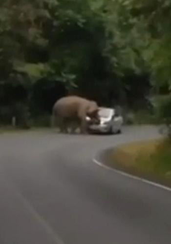 13.jan.2015 - Imagine a situação: você está passeando de carro por um parque quando de repente um elefan