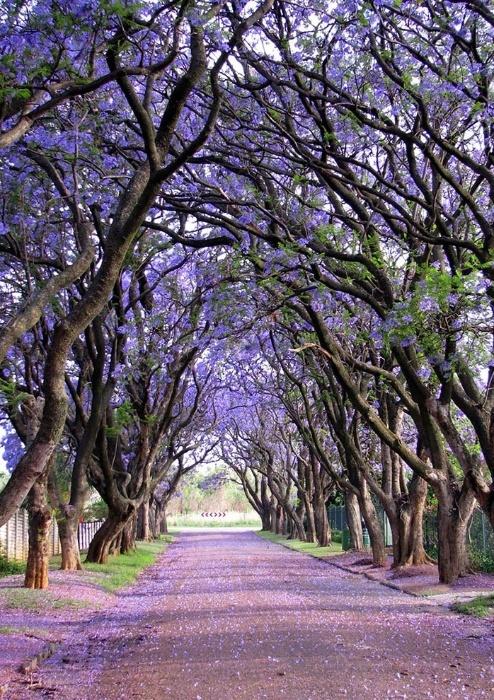 2.fev.2015 - A representante sul-africana da lista é uma charmosa rua da cidade de Cullinan
