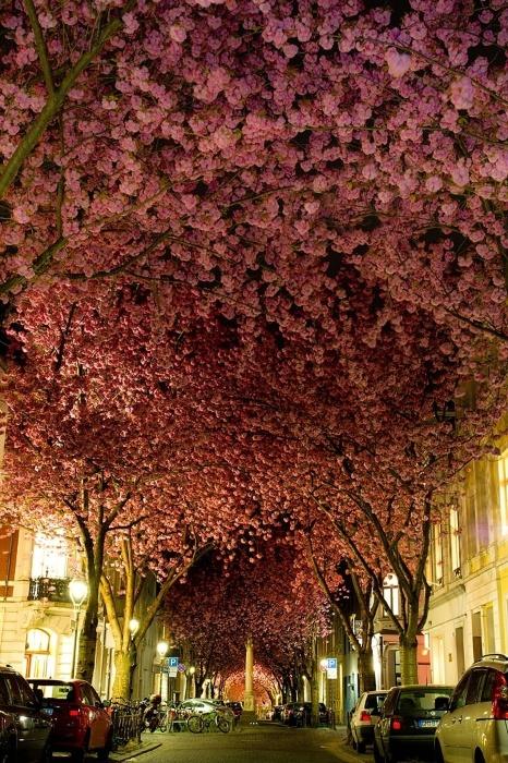 2.fev.2015 - Esta arborizada rua em Bonn, na Alemanha, integra o time das mais belas do mundo, segundo lista do site gringo Bored Panda