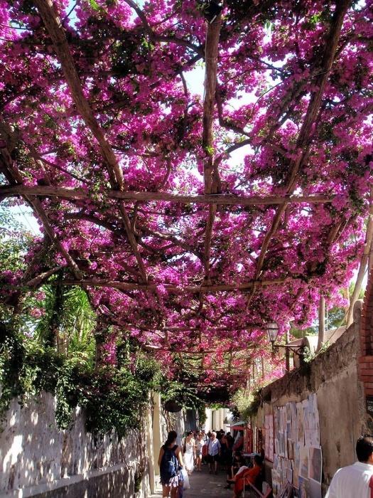 2.fev.2015 - Esta arborizada rua em Positano, na Itália, integra o time das mais belas do mundo, segundo lista do site gringo Bored Panda