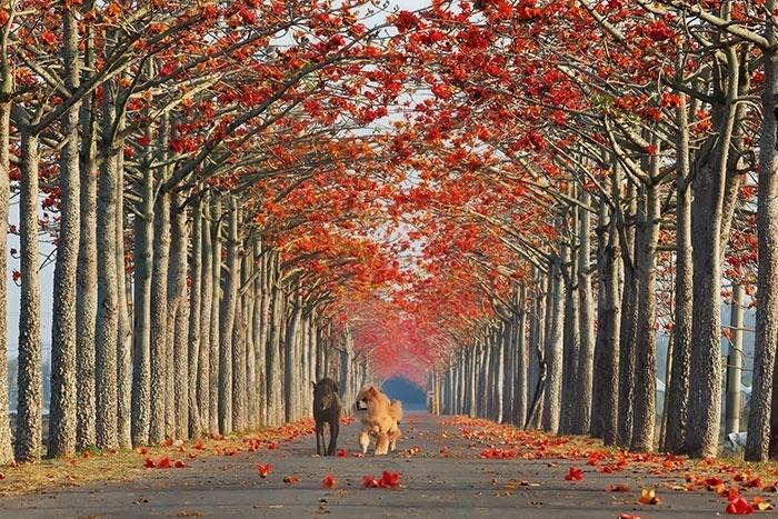 2.fev.2015 - Esta rua de Taiwan também entrou na lista das ruas mais bonitas do mundo