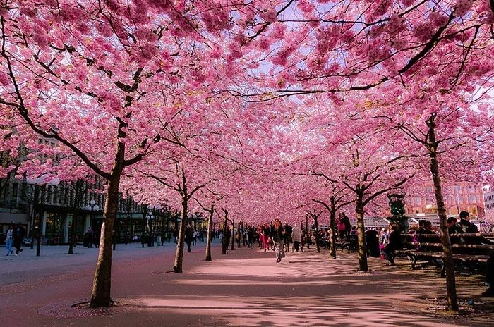 2.fev.2015 - Na capital da Suécia, Estocolmo, fica esta simpática rua, que está na lista das mais bonitas do planeta