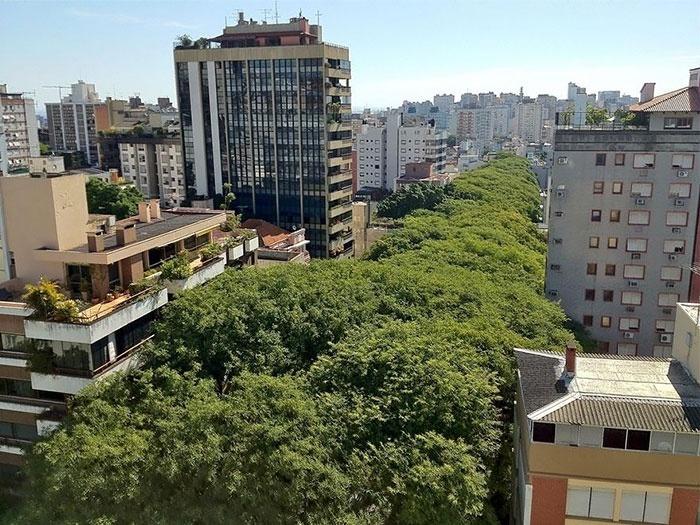 2.fev.2015 - O Brasil também aparece na lista das ruas mais belas do mundo. Segundo o site Bored Panda, esta rua arborizada de Porto Alegre faz parte do time
