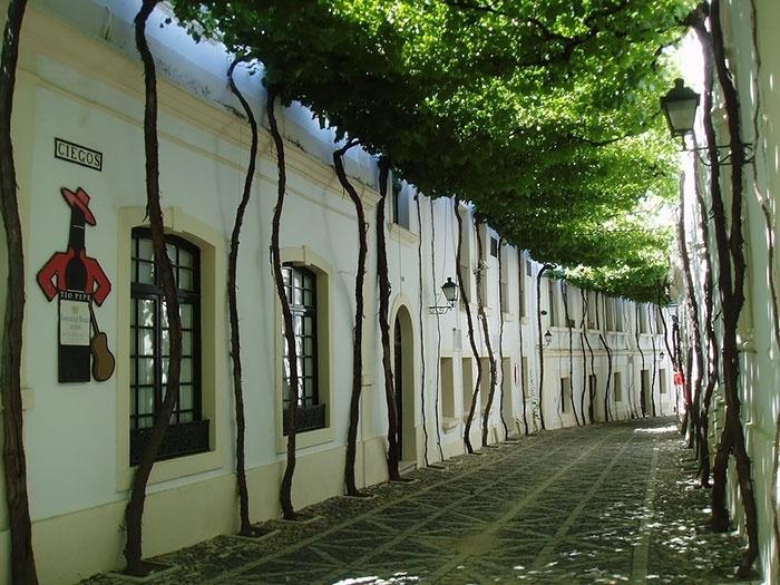 2.fev.2015 - O site gringo Bored Panda fez uma lista reunindo as ruas mais bonitas do mundo. Arborizadas e com paisagens de tirar o fôlego, as imagens mostram ruas onde qualquer pessoa gostaria de morar. Na imagem, uma rua de Jerez, na Espanha