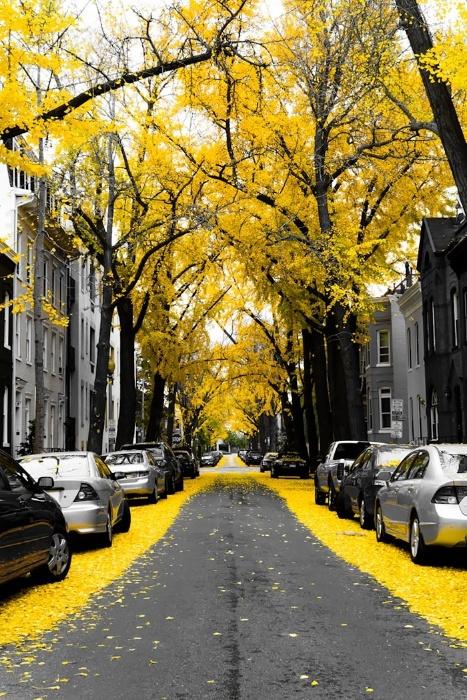 2.fev.2015 - Uma rua de Washington, capital dos Estados Unidos, é a representante do país norte-americano na lista