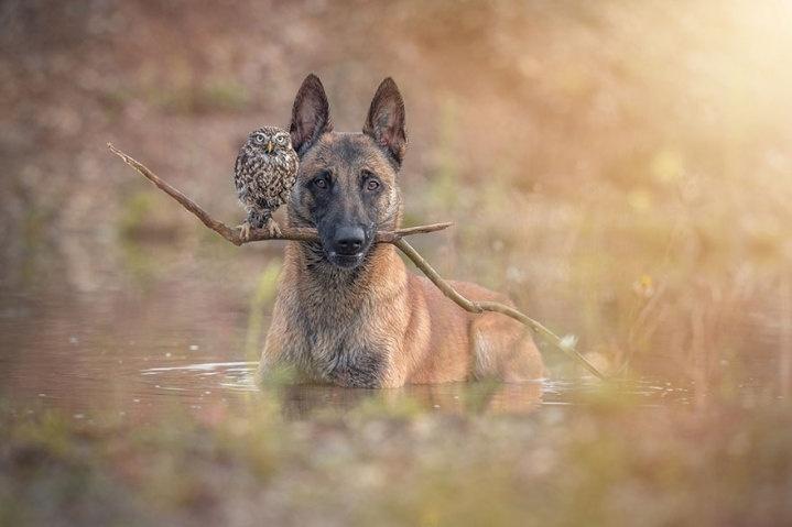 22.fev.2015 - A amizade para lá de inusitada entre entre a coruja Else e o cão Ingo viraram tema de um ensaio fotográfico especial da alemã