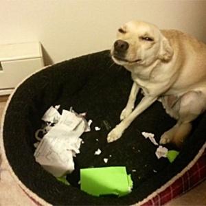 Não, ela não deu a velha desculpa do cachorro