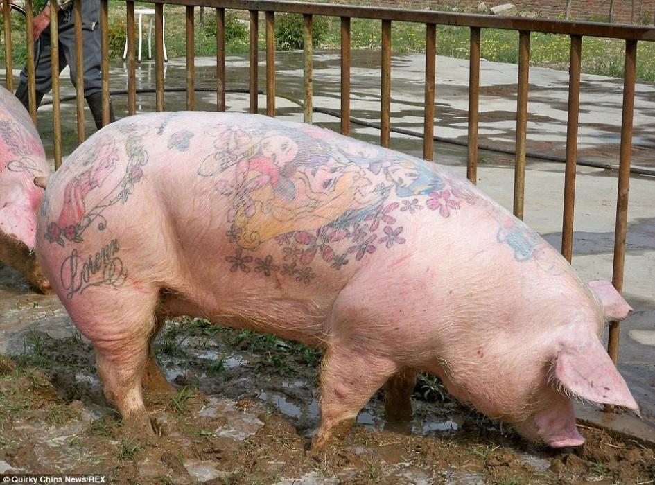 20.mar.2015 - O artista belga Wim Delvoye, que tatua porcos desde a década de 90, transferiu o projeto para uma fazenda na China, longe do olhar de reprovação das entidades de defesa dos animais