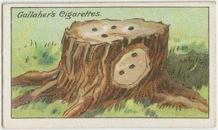2. Como evitar que um tronco volte a brotar: para que o tronco de uma árvore cortada não volte a brotar, faça furos no alto e na lateral, sob a casca. Nesses furos, injete uma solução de fungicida e sal. Muito ecológico #SQN
