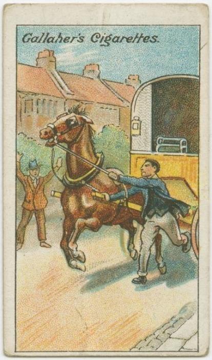 24. Como parar um cavalo desembestado: nunca corra à frente do cavalo, vá sempre do lado dele. Mantenha uma mão no cabresto e, com a outra, vá direcionando o animal para o local desejado. Não pule sobre ele, abrace ou grite. Isso vai assustá-lo ainda mais